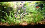Наш аквариумный зомбо-ящик! – домашняя аквариумистика