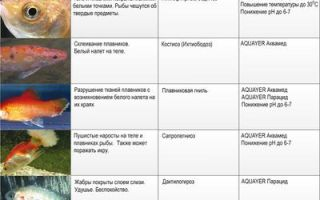 Лечение и болезни аквариумных рыбок – домашняя аквариумистика