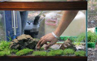 Как в аквариуме сделать лучший питательный грунт для растений своими руками? – домашняя аквариумистика