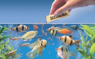 Видео, как делают корма для рыб тетра – домашняя аквариумистика