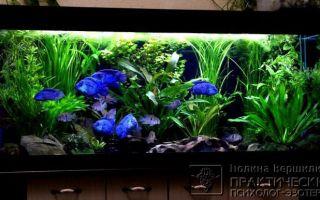 Красивые рыбки ялтинского аквариума – домашняя аквариумистика