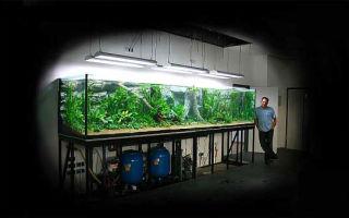 Бициллин для рыб и аквариума – домашняя аквариумистика