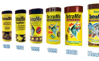 Легендарный тетрамин! – домашняя аквариумистика