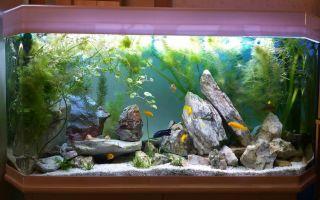Сайту фанфишка.ру 1 год – домашняя аквариумистика