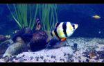 Всем любителям искусственных аквариумных декораций посвящается! – домашняя аквариумистика