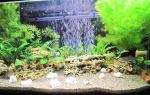 Роголистник аквариумное растение: содержание, виды, фото-видео обзор – домашняя аквариумистика