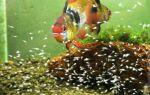 Задний фон в аквариум своими руками – домашняя аквариумистика
