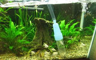 Каким аквариумным сифоном почистить грунт? – домашняя аквариумистика