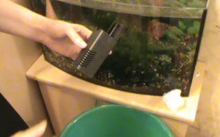 Почему из аквариума идет неприятный запах, как избавится? – домашняя аквариумистика
