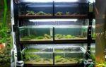 Создаём необходимые условия для аквариумных креветок – домашняя аквариумистика