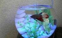 Какие рыбки живут в аквариуме. каких рыбок завести – домашняя аквариумистика