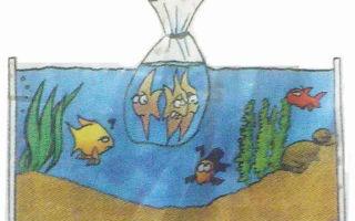 Самые популярные заболевания аквариумных рыбок – домашняя аквариумистика