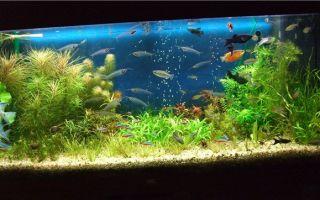 Сленг аквариумистов – домашняя аквариумистика