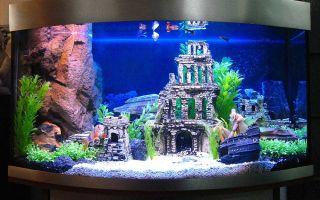Оформление и дизайн аквариума пример – домашняя аквариумистика