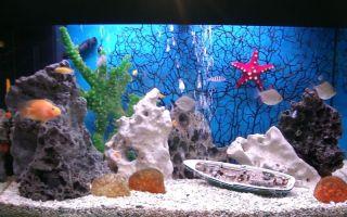 Оформление аквариума: фото, видео примеры – домашняя аквариумистика