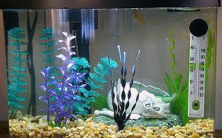 Температура воды для аквариумных рыбок – домашняя аквариумистика