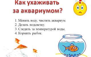 Рекомендации по уходу за рыбками меченосцами в аквариуме – домашняя аквариумистика