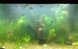 9 причин помутнения вода в аквариуме и что делать против этого – домашняя аквариумистика