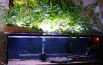 Фитофильтр для аквариума видео № 5 – домашняя аквариумистика