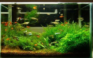 Правильный аквариум, какой он? – домашняя аквариумистика