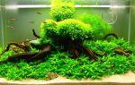Аквариумные растения все для начинающих! – домашняя аквариумистика
