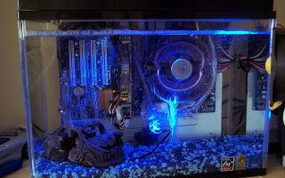 Компьютерный аквариум! – домашняя аквариумистика