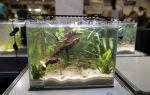 """Фотоконкурс """"акваfishка сезона"""" – домашняя аквариумистика"""