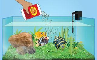 Как кормить аквариумных рыбок: советы, рекомендации! – домашняя аквариумистика
