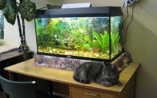 Большой аквариум: запуск, обустройство, нюансы! – домашняя аквариумистика