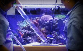 Как чистить и мыть аквариум? – домашняя аквариумистика