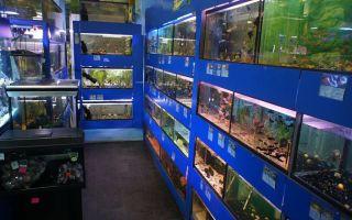 Зоомагазины днепродзержинска – домашняя аквариумистика