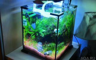 Как вам такой аквариумный кубик? – домашняя аквариумистика