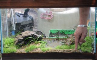 Пошаговая инструкция по запуску аквариума с нуля: место, грунт, вода, рыбки – домашняя аквариумистика