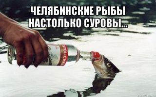 Челябинские рыбы настолько суровы, что нападают на рыбаков первыми! – домашняя аквариумистика