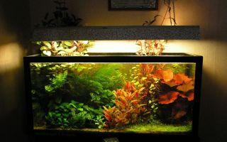 Освещение аквариума и выбор ламп, какие лучше выбрать? – домашняя аквариумистика