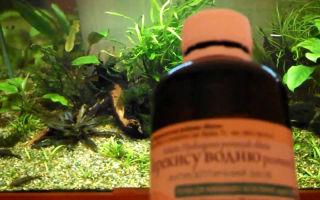Как избавиться от водорослей в аквариуме при помощи сайдекса? – домашняя аквариумистика