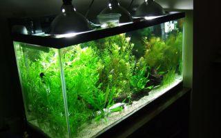 Правильная установка светодиодного освещения для акварима – домашняя аквариумистика