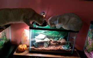 Кот врезается в аквариум – видео! – домашняя аквариумистика