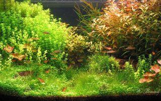 Фитотерапия для рыбок и аквариума – домашняя аквариумистика