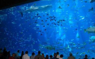 Гигантское акваселфи с китами! – домашняя аквариумистика