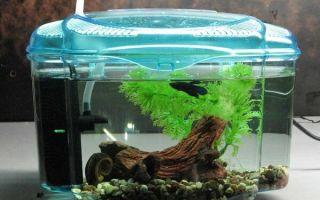 Рыбка плюется электричеством! – домашняя аквариумистика