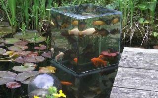 Все о карпах кои: содержание в пруду и аквариуме, фото-видео обзор – домашняя аквариумистика