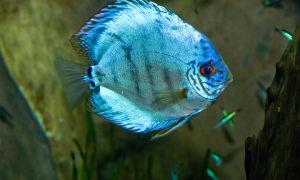 Йодинол для аквариума – домашняя аквариумистика