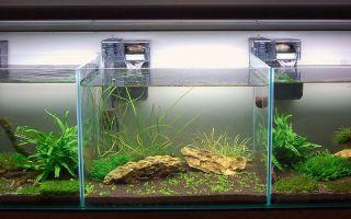 Водяные глазки: содержание, совместимость, разведение, фото-видео обзор – домашняя аквариумистика