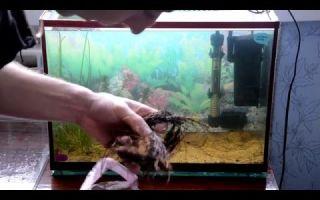 Неоны разведение и нерест – домашняя аквариумистика