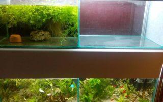 Аквариума с креветками кристалл – домашняя аквариумистика