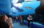 Самый большой аквариум в латинской америке! – домашняя аквариумистика