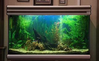 Аквариум с растениями пример оформления – домашняя аквариумистика