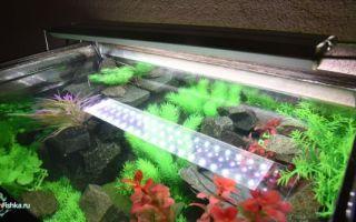 Обзор светильников для аквариума laguna – домашняя аквариумистика