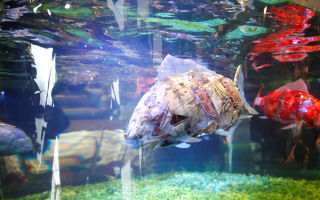 Отель с роботизированными рыбками! – домашняя аквариумистика